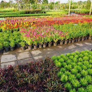 Shore Acres Plant Farm